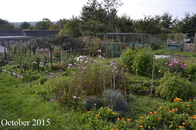 Allotments in October