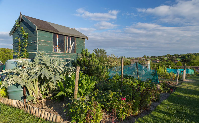 an allotment with shed