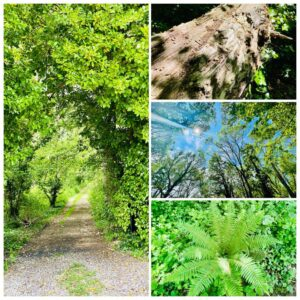 stroud coppice collage of pictures